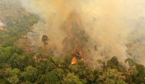 Planeta--llamas-selva-brasil-wwf-osbo