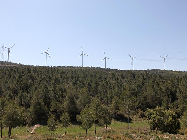 prevención gestión forestal bioeconomía