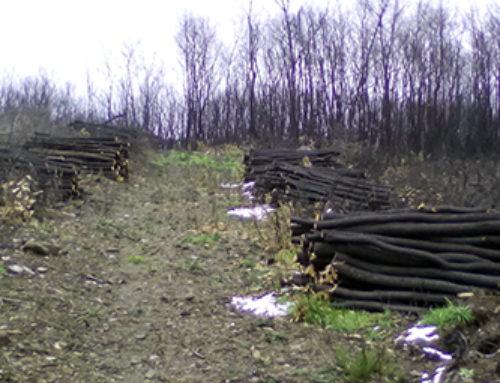 Ratificada la emergencia de recuperación del incendio de Rianxo-Dodro