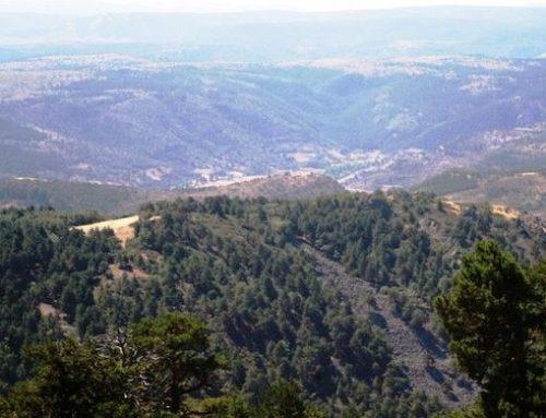 La gestión forestal como herramienta de conservación