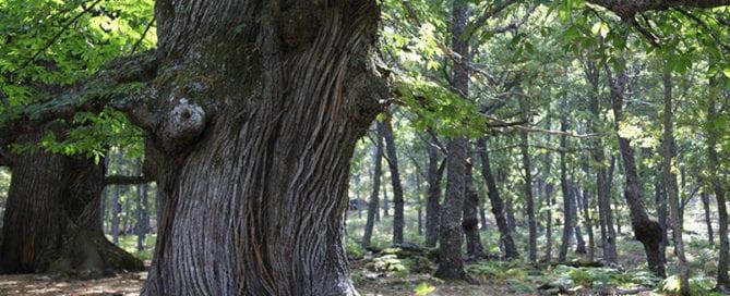 situacion-bosques-España