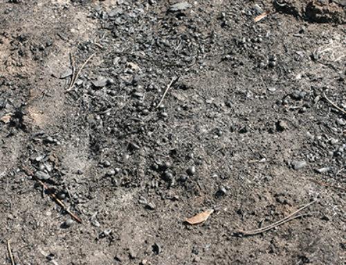 Los incendios forestales: causa de desertificación en España