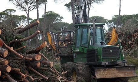 trabajo-foresta-convenio-forestal