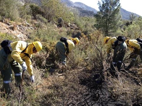 trabajo forestal, empleo forestal valenciano