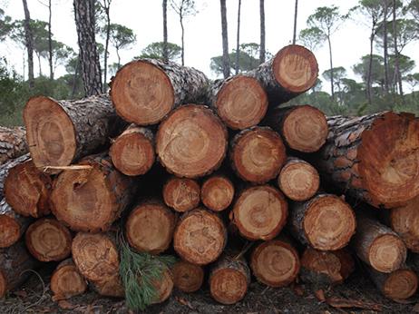 troncos-madera-convenio-forestal
