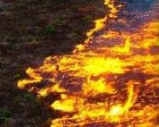 wwf-incendios-amazonia-campaña