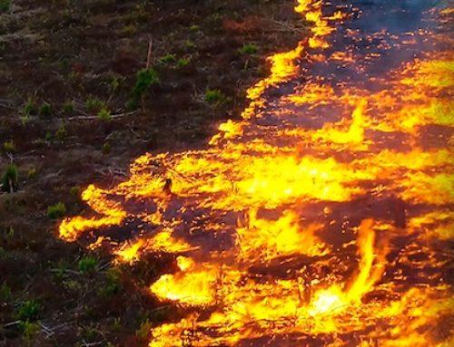 WWF inicia una recogida de firmas en apoyo de la Amazonia