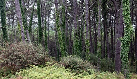 Xunta-Galicia-gestion-forestal-pinos