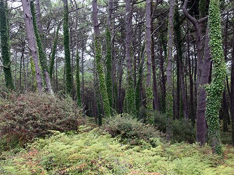 Xunta de Galicia, Dirección general de Planificación Forestal y Ordenación